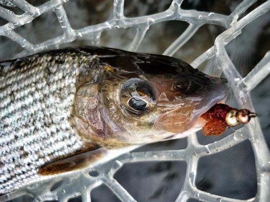 Fliegenfischen Hessen Kinzig // Äsche // Dezember 2016 // smallbud.com