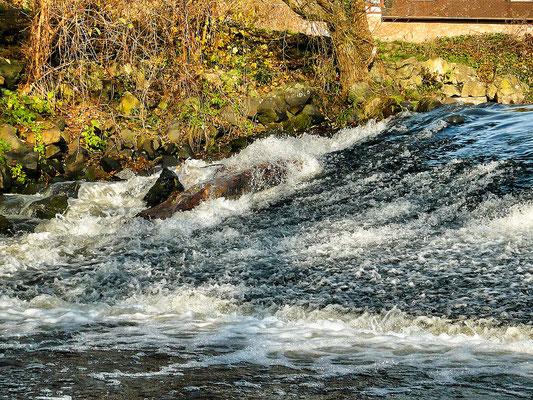 Fliegenfischen und Spinnfischen in der Kinzig und am Main / Natur im November