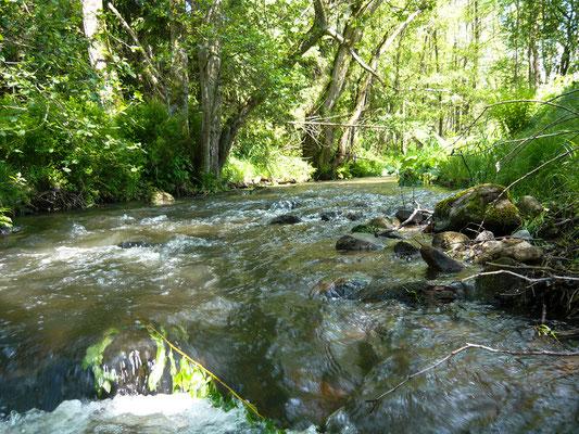 Kinzig, Gründau, Main, Sinn, Edersee und andere Gewässer