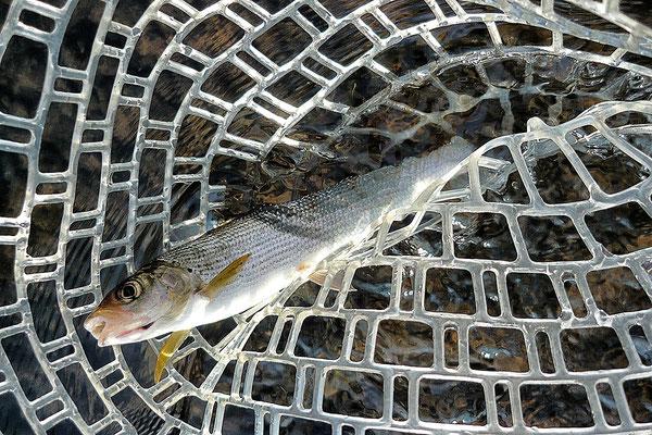 Fliegenfischen in Hessen