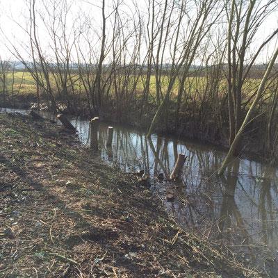 Fischaufstieg Erlensee März 2016