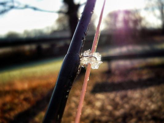 Fliegenfischen und Spinnfischen in der Kinzig und am Main / Dezember Eiszeit