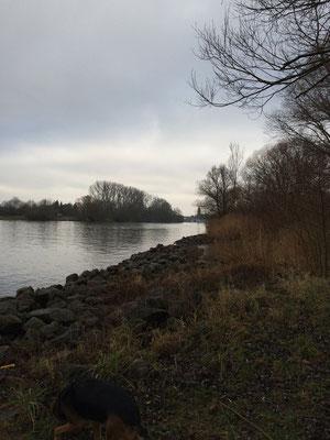 Niedrigwasser am Main / Januar 2016