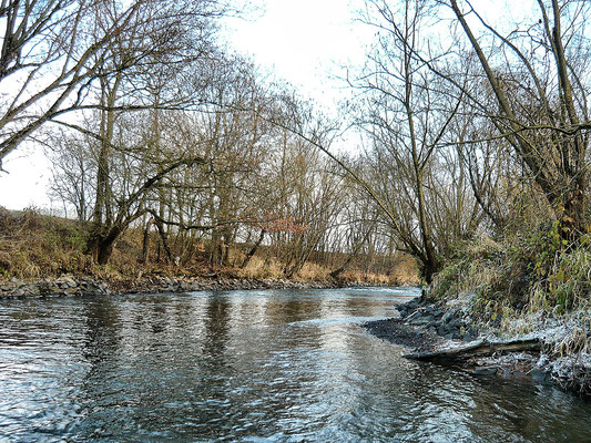 Fliegenfischen und Spinnfischen in der Kinzig und am Main / Winterstimmung