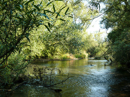 Kinzig, Gründau, Main, Sinn, Edersee und andere Gewässer / Fliegenfischen / Kajak / Kanadier