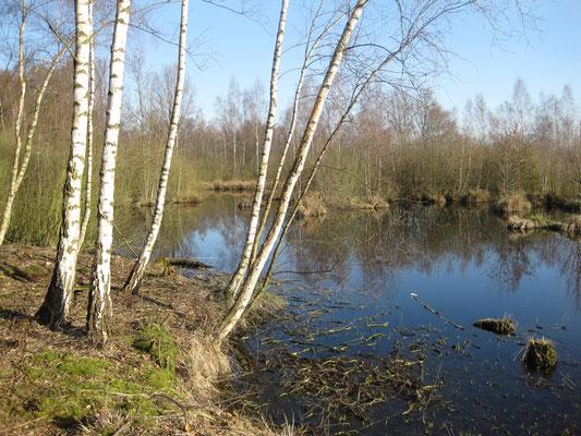 ehemalige Moorentnahmestelle im Westen der Naturschutzgebietes