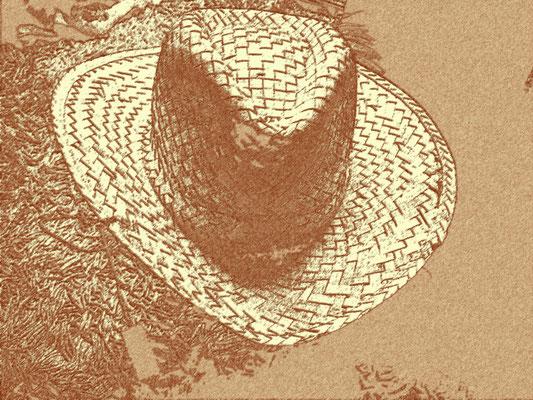 Chasse-mouches australien