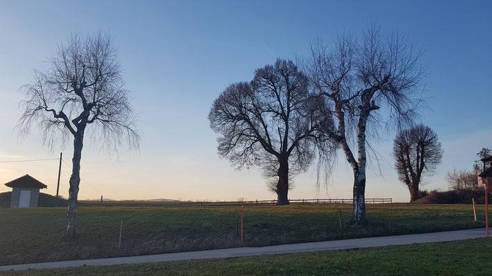 Bellevue ob Ebersecken