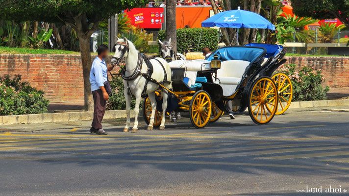 Malaga horse-drawn carriage for round trips