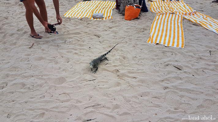 Ein unbekümmerter Zeitgenosse am Caravelle Beach
