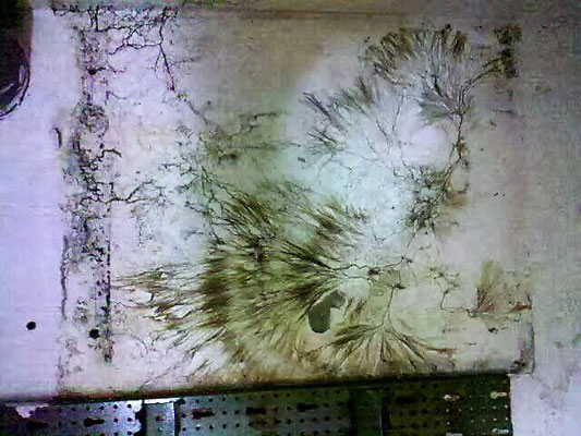 Schwammbefall Wand