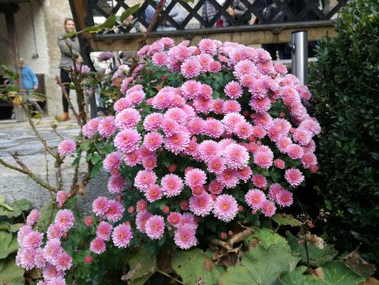 Blumen im Burghof 26. Oktober 2018