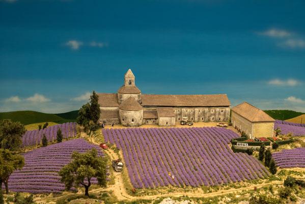 Lavendel-Acker