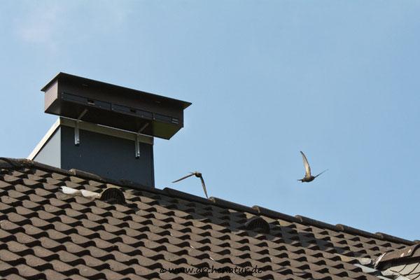 Ausflug von Bernhard & Bianca, jetzt schnell aufs Dach...