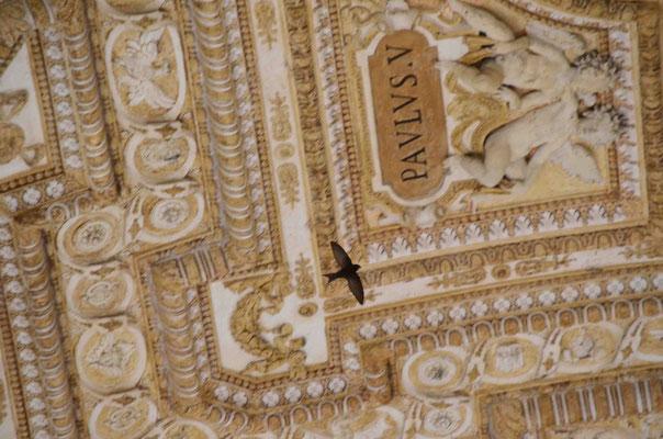 Verflogen-Mauersegler in der Eingangshalle zum Vatikan