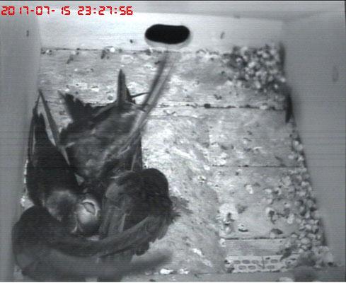12 Flügel auf kleinstem Raum und der kleine Quax schaut frech heraus