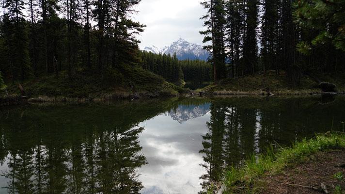 Moose Lake im Jasper National Park