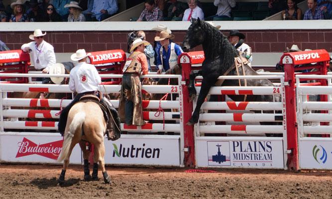 Kurzer Check eines der Rodeopferde, was in der Arena passiert