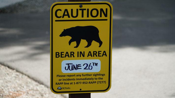 Bear Country - an jeder Ecke könnte einem ein Bär begegnen