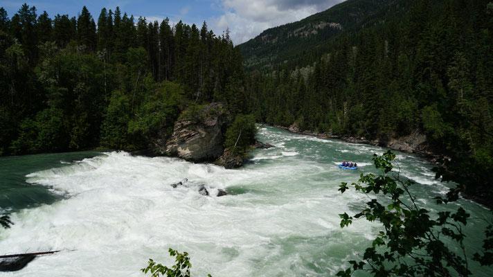 Reargard Falls; So ziemlich die letzte Stufe, die Lachse überspringen. Bei uns waren nur Schlauchboote und Kanus unterwegs