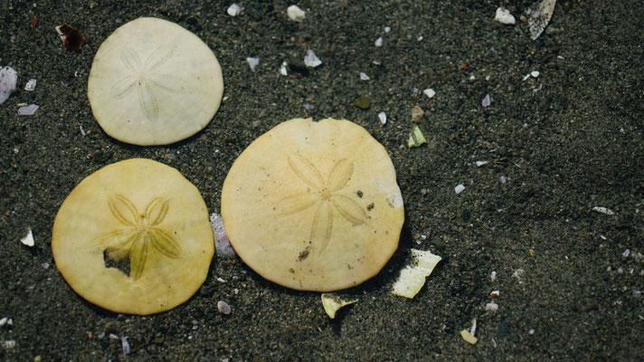 Muscheln an der Ostküste von Vancouver Island