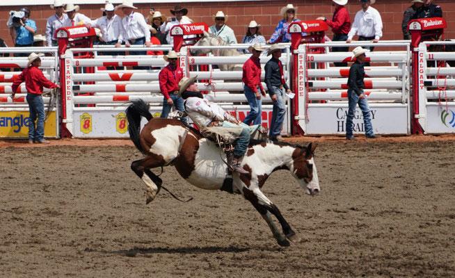 klassisches Rodeo ohne Sattel