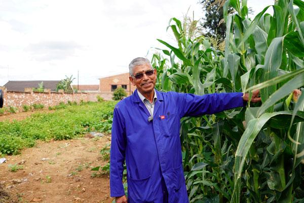 Mr. Aheer hat hinter der Suppenküche Mais gepflanzt