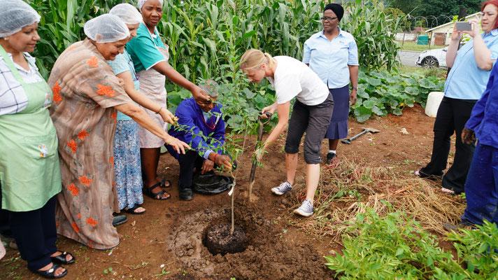 Ein Granatapfelbaum für den Verein Siyabonga