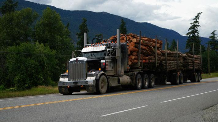 Holztransport auf der Strasse, viel wird auch über Wasserwege transportiert