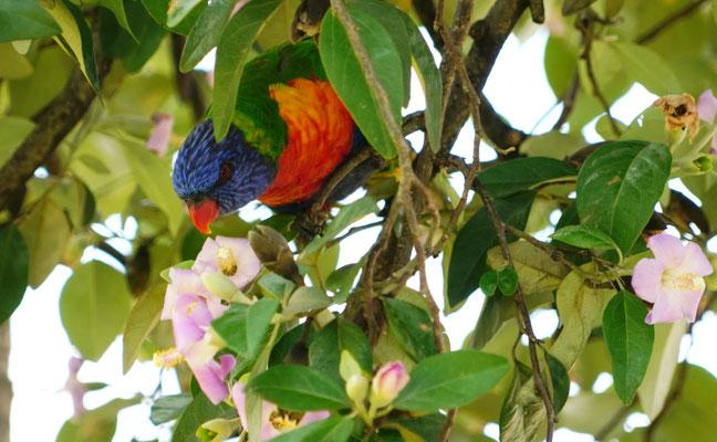 Parrot having breakfast