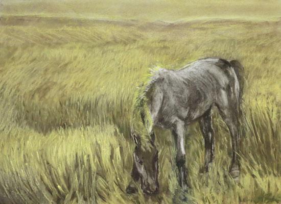 Titel: Pferd beim Grasen, Maße: 80x60 cm, Jahr: 2004