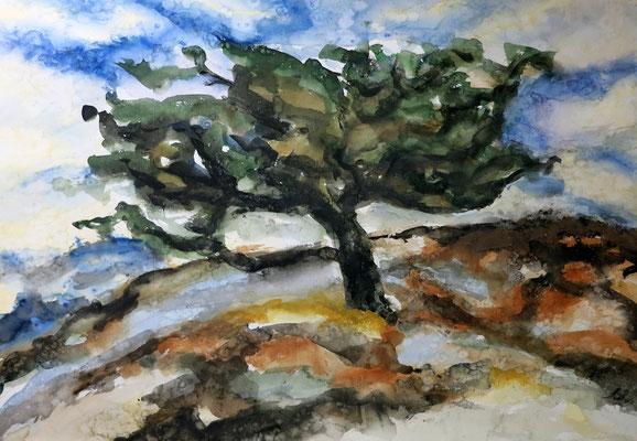 Titel: Apfelbaum, Maße: 83x58 cm, Technik: Aquarell, Jahr: 1998
