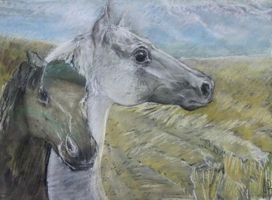Titel: Pferdepaar, Maße: 70x50 cm, Jahr: 2006