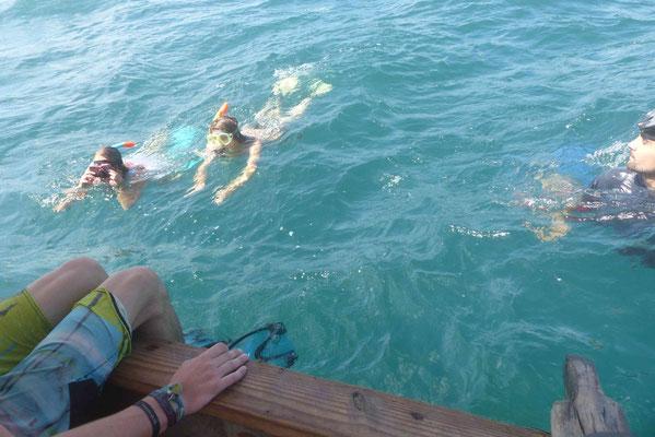 Walhaischwimmen