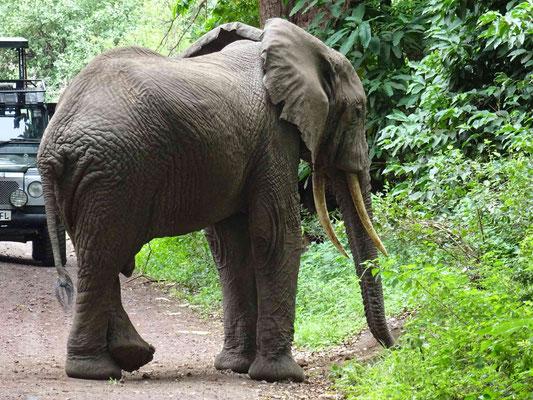 Elefant beim Entspannen