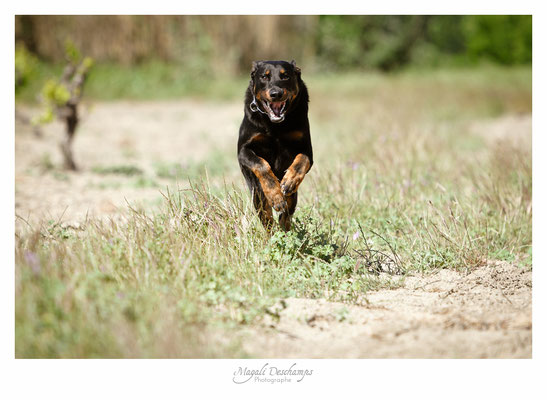 Photo chien en action-MD Photogographies