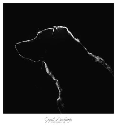 Photo artistique chien studio Martigues 13220