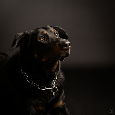 Photo chien studio Martigues 13220