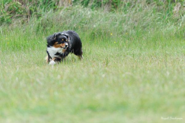 photo chien en extérieur MD Photogographies