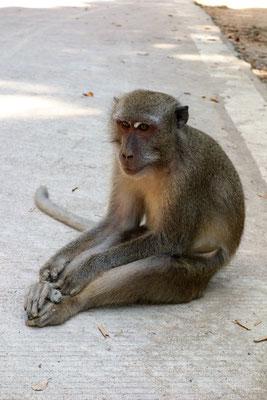 friedfertiger Affe im Nationalpark