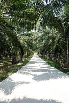 Straße mit schönen Palmen