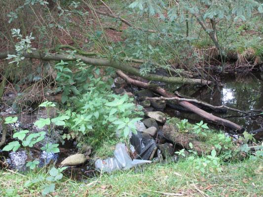 In die Jahre gekommener Stau zur Erhaltung eines hohen Wasserstandes. Die Staudämme sollen in naher Zukunft erneuert und ggf. erhöht werden, damit wieder ein moortypischer Wasserstand erreicht werden kann.