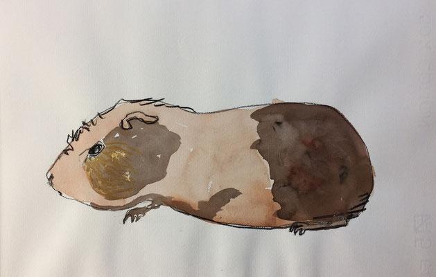 Meerschweinchen Umbra-Siena