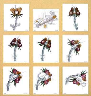 Nacimiento. Lápiz, polen, petalos y hojas de rosa sobre papel. 20.5 cm X 21.7 cm (8) y 19.5 cm X 21.7 cm. (1). 2007.