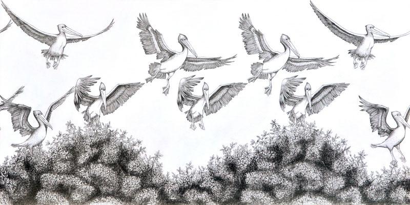 Despegar una y otra vez. Dibujo a lápiz sobre papel opalina. 30 cm X 60 cm. 2014.