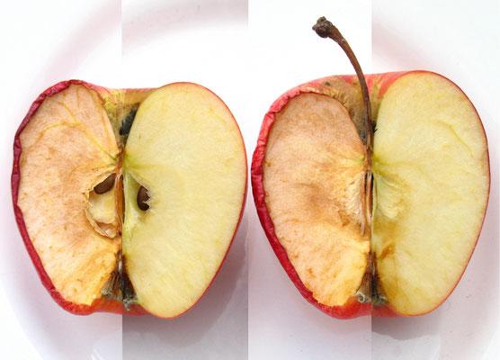 Fruto Paradójico.  Fotografía digital. 50 cm X 70 cm. 2009