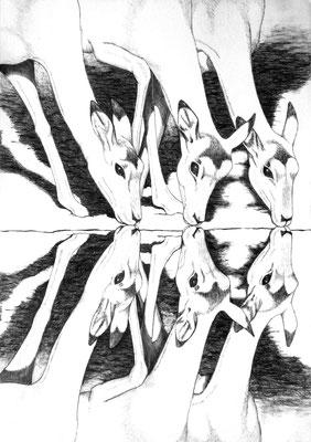 ¿Tres o seis?. Dibujo a lápiz sobre papel opalina.  45 cm X 31.5 cm.  2009