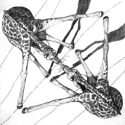 Amor propio. Dibujo a lápiz sobre papel opalina. 33 cm X 33 cm. 2009