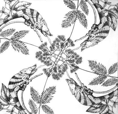 Lógica Camaleónica. Dibujo a lápiz sobre papel opalina. 35 cm X 35 cm. 2009.