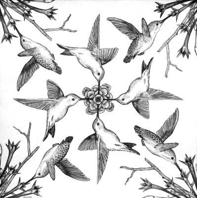 Simetría Colibrí. Dibujo a lápiz sobre papel opalina. 35 cm X 35 cm. 2009.